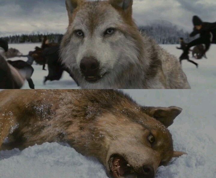 So sad Seth dies and Leah cries out to Jacob!!!!!! Tears ... Twilight Wolf Pack Seth