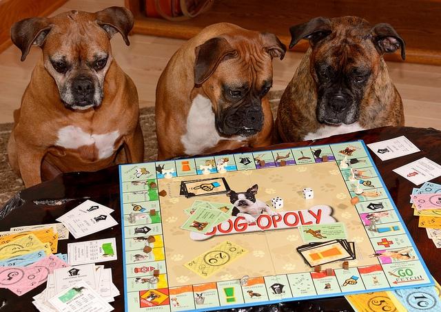 Resultado de imagen para dogopoly juego le gusta los perros