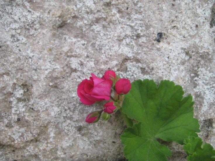 A small detail #flowers, #eleonashotel, #Greece