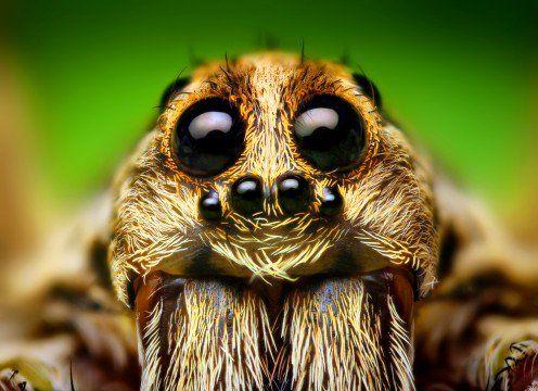 Best Animal Eyes Images On Pinterest Eyes Beautiful Eyes - 24 detailed close ups of animal eyes