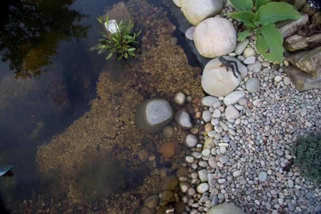 Wwt wetlands for life create a wildlife pond wildlife for Garden pond life
