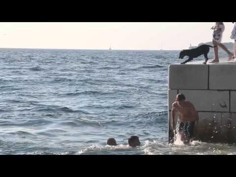 Skaczący do wody pies - Zadar 2014 || http://crolove.pl/pies-skaczacy-wody-w-zadarze/ || #Chorwacja #Croatia #Hrvatska #Dog #Summer #Travel #Zadar #Adriatic #Sea