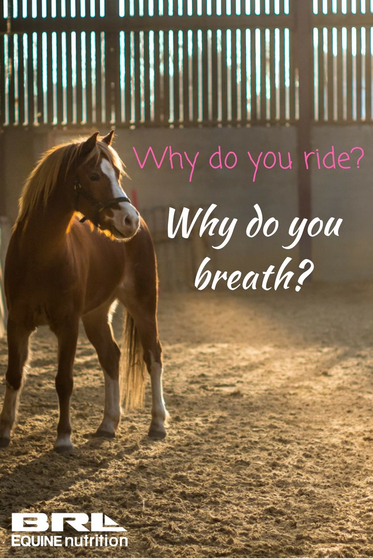 Why do you ride? Why do you breath? #BRLEquine #loveyourhorse #lovetoride