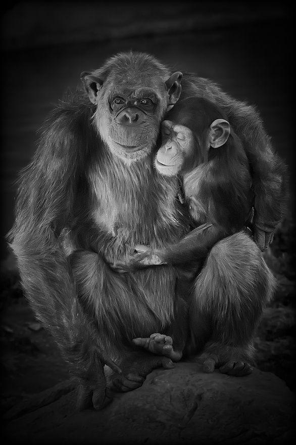 Love my monkeys