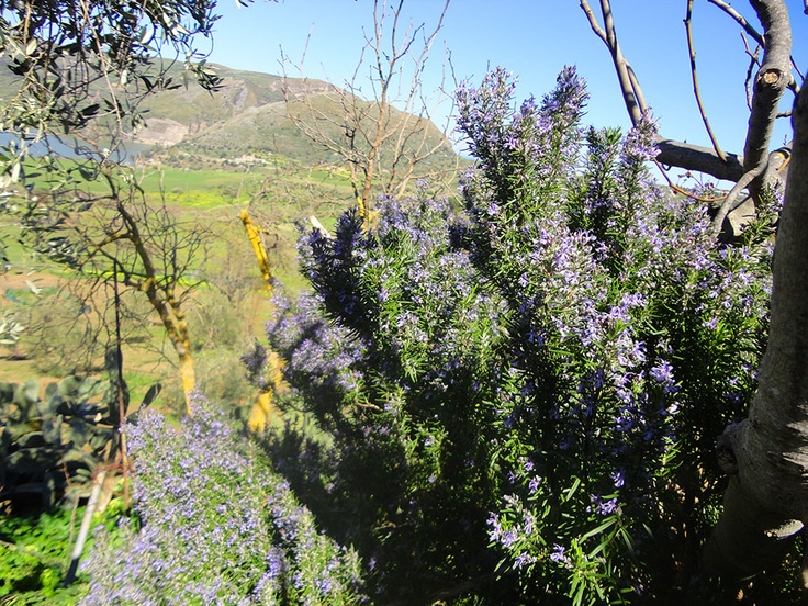Are you looking for an incredible holiday in #Sicily surrounded by nature and good tastes? Welcome to #Caccamo