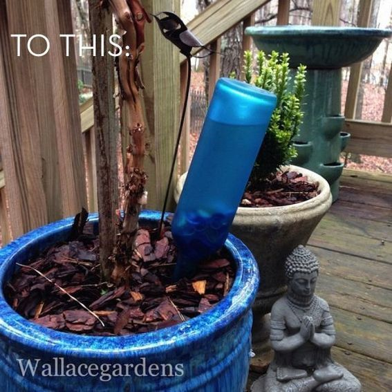 How To: Turn a Wine Bottle into a Self-Watering Device » Curbly | DIY Design Community