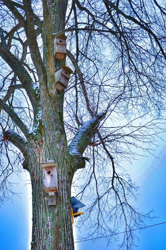Птичье общежитие