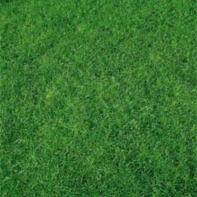 Make Your Lawn Healthy and Green