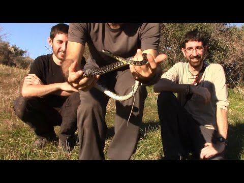 Bicheando  - Reptiles, Anfibios y Ornitorrinco - Homenaje a Rafael Vazquez... https://www.youtube.com/watch?v=U3HjbvftrQU