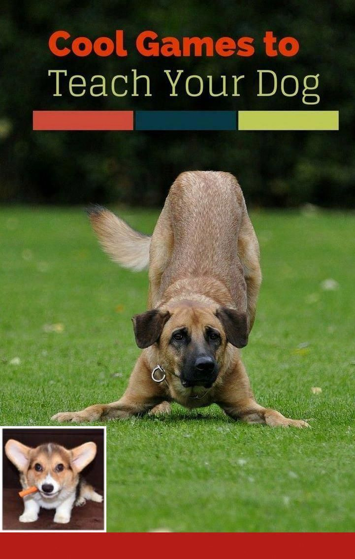 Dog Obedience Training Kingsport Tn Dogtraining And