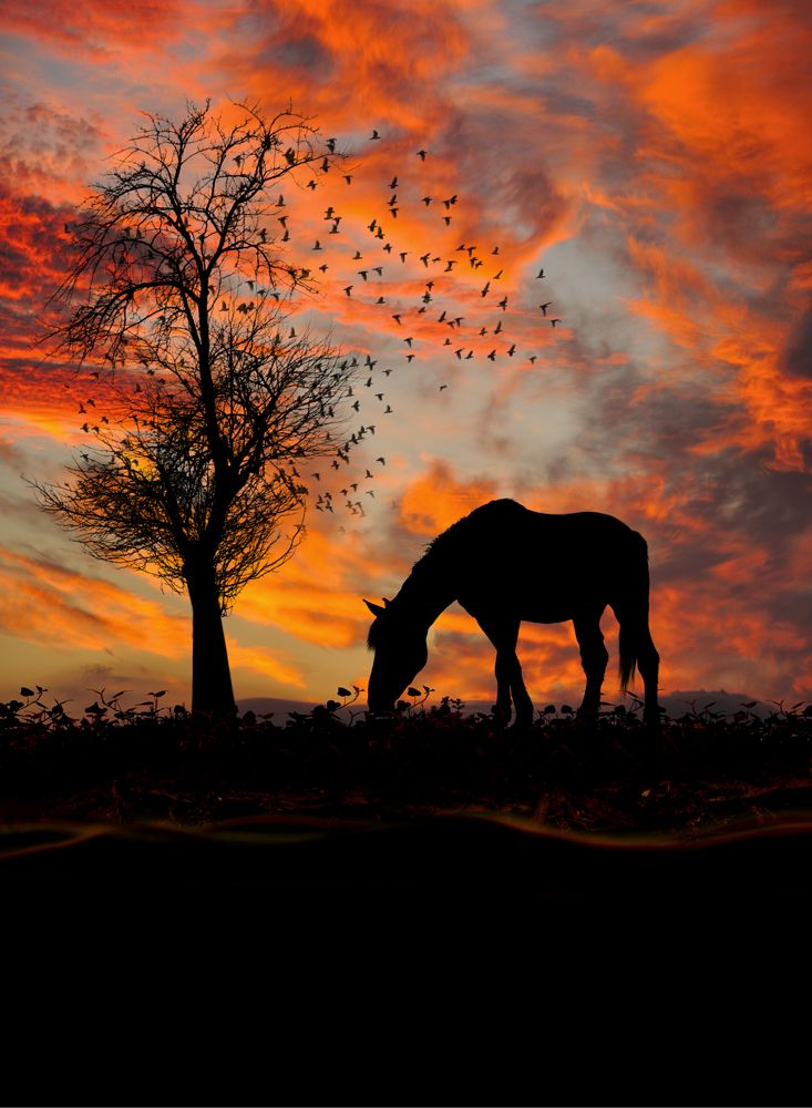 It was a good day. Good night.      Caras Ionut Photographer :)