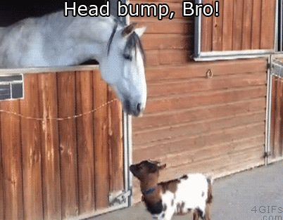 14 Perfect Animal Pairs That Are Looking Out For Each Other