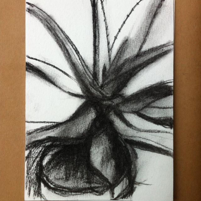 Potted aloe, charcoal on paper.
