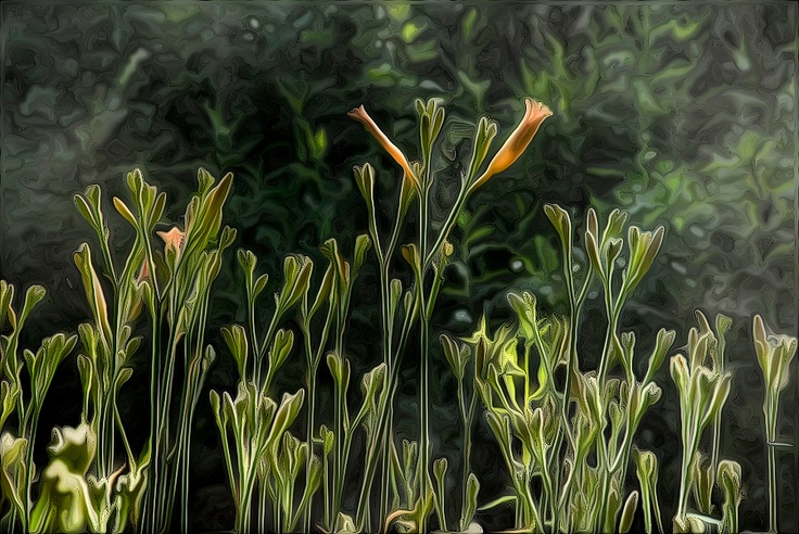 2012 - fred1st's Photos #plantlife Daylilies by the creek