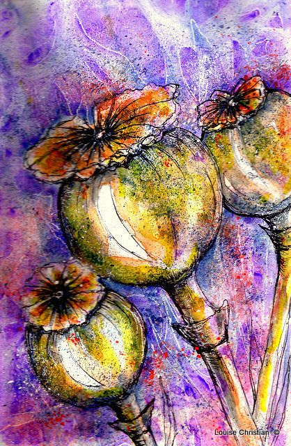 POPPY PODS PAINTING..Painting in Inks & Watercolor.