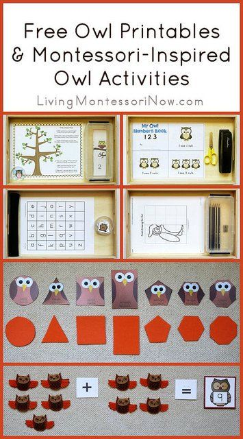"Free Owl Printables (designed for younger students). To go with ""Owls in the Family"" Sonlight Core B"
