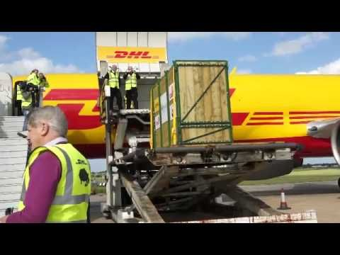 DHL transports endangered black rhinos back to the wild.