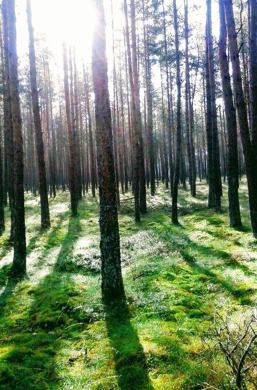 Tajemniczy spokój #forest