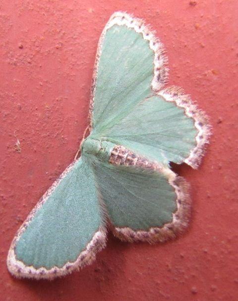 P Moth Decorator 25+ best ideas about M...