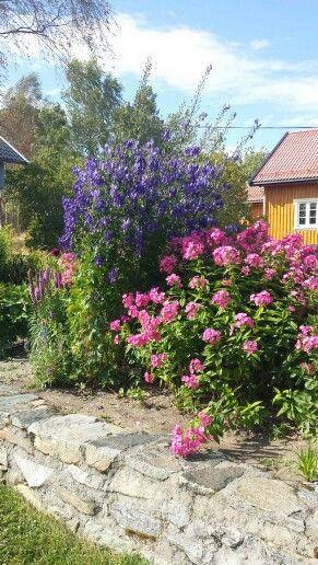 1 august. Flocs in garden.