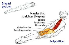 Oefeningen voor je rug