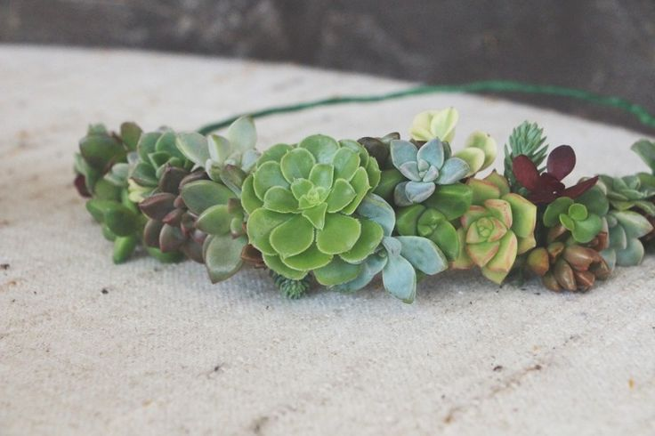 diy succulent crown tutorial via needles + leaves . I know what I want for my wedding! http://needlesandleaves.net/blog/2013/8/14/diy-succulent-crown #diywedding