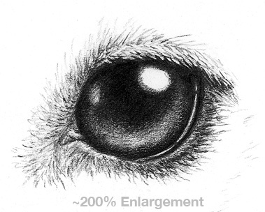 dog eye tutorial