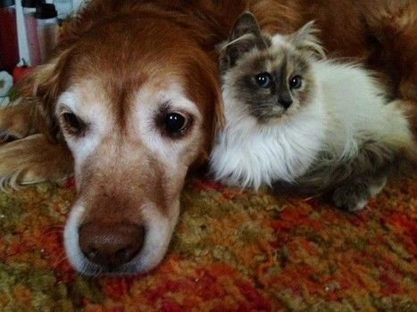 Outstanding 1000 Images About Adopt A Senior Pet Month On Pinterest Pets Short Hairstyles For Black Women Fulllsitofus