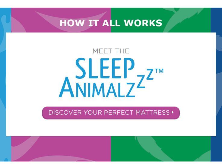 sleep animalzzz taking the guesswork out of finding the perfect mattress instead of one
