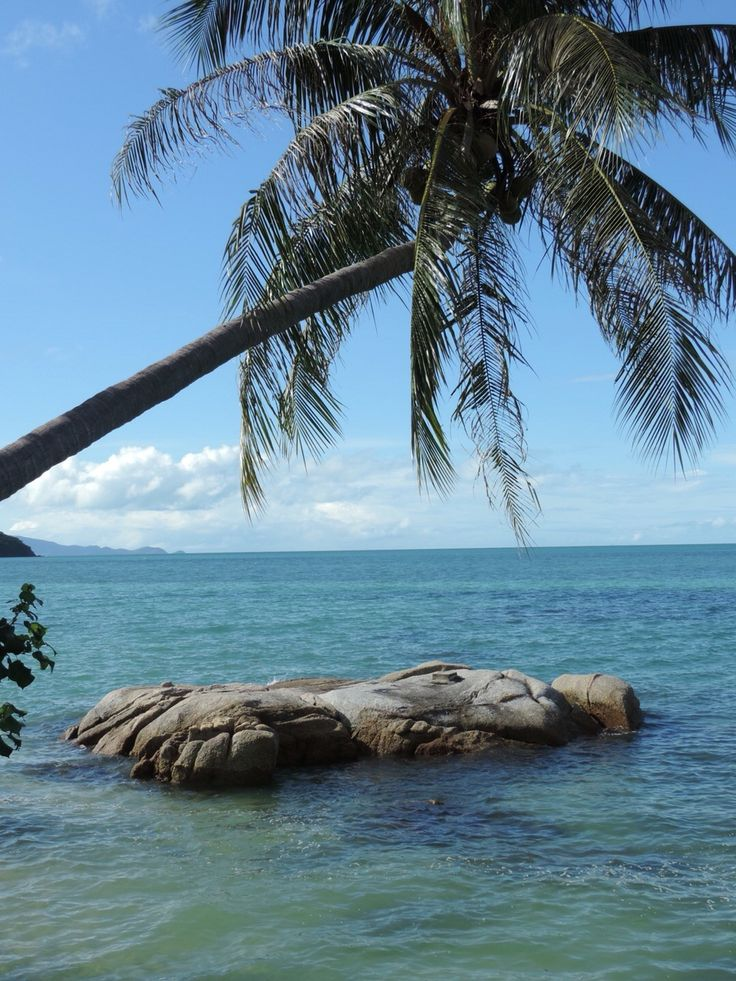 Iconic island palm over water