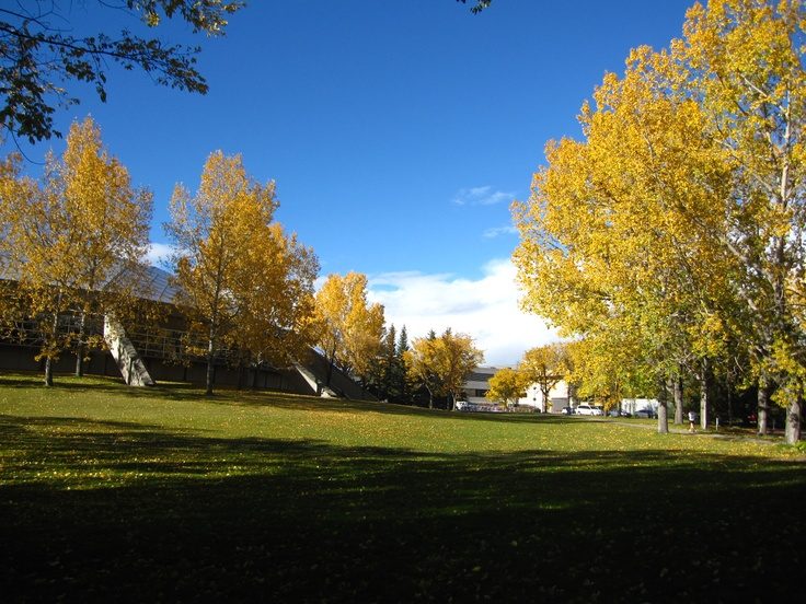 Calgary in the Fall