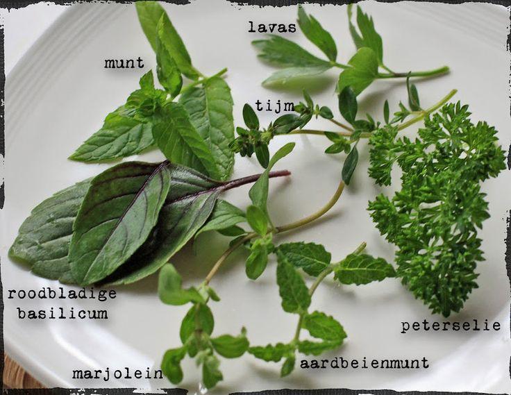 munt, tijm, lavas, roodbladige, basilicum, marjoleil, aarbeijen munt en peterselie