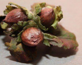 """Холодный фарфор """"Лесной орех"""" – 22 фотографии"""