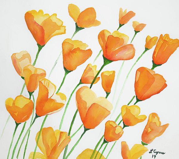 Watercolor – California Poppies
