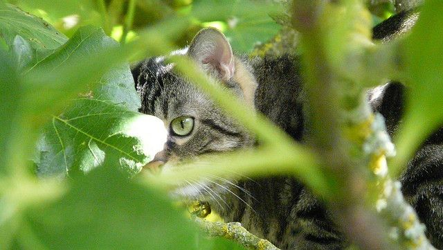 33 best Siesta under the FIG TREE images on Pinterest ...