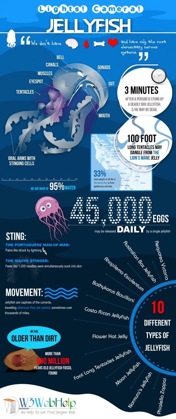 Jellyfish Infographic