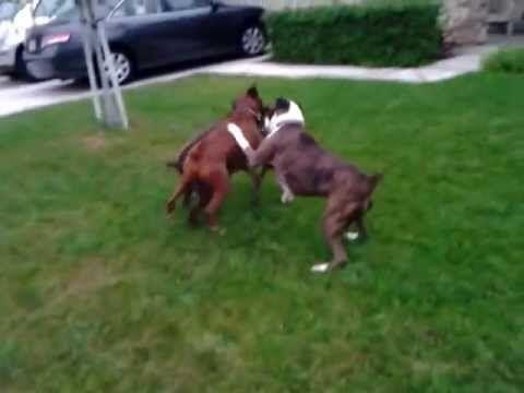 Aggressive Dog Training Orange County