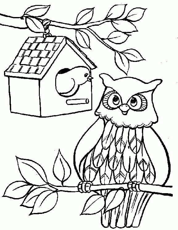 Cute Owl Songbird Coloring Page