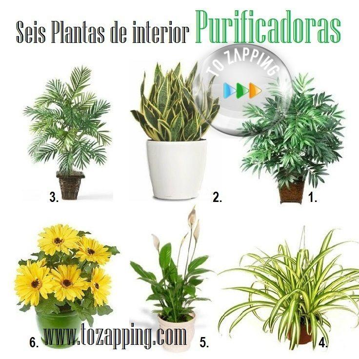 M s de 25 ideas incre bles sobre plantas purificadoras de - Plantas de interior que purifican el aire ...