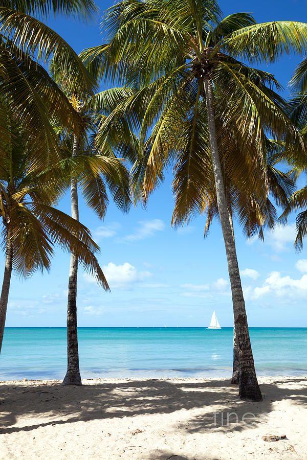 ✯ Window On The Caribbean