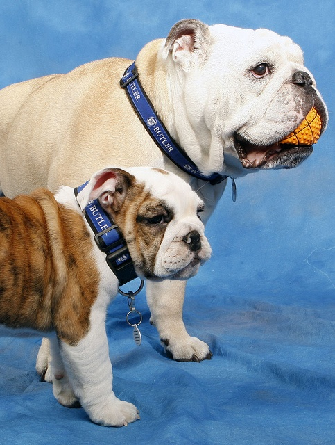 Butler Blue II and Trip - March 2, 3012