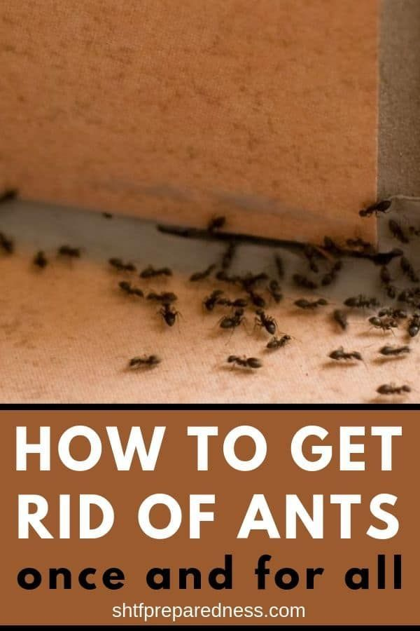 How To Get Rid Of Ants Once And For All Get Rid Of Ants Rid Of