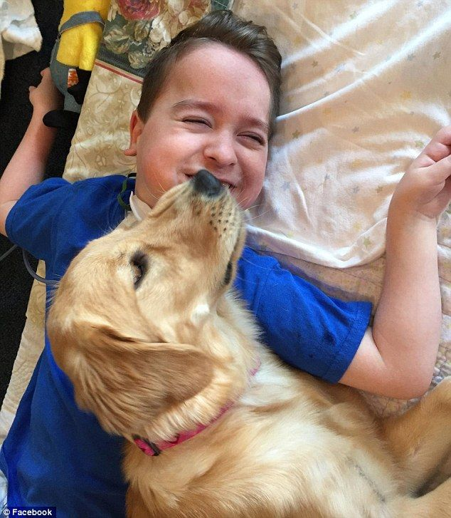 Special two: Johnny suffers from quadriplegic cerebral palsy, and Lexi, his rescue dog, is...
