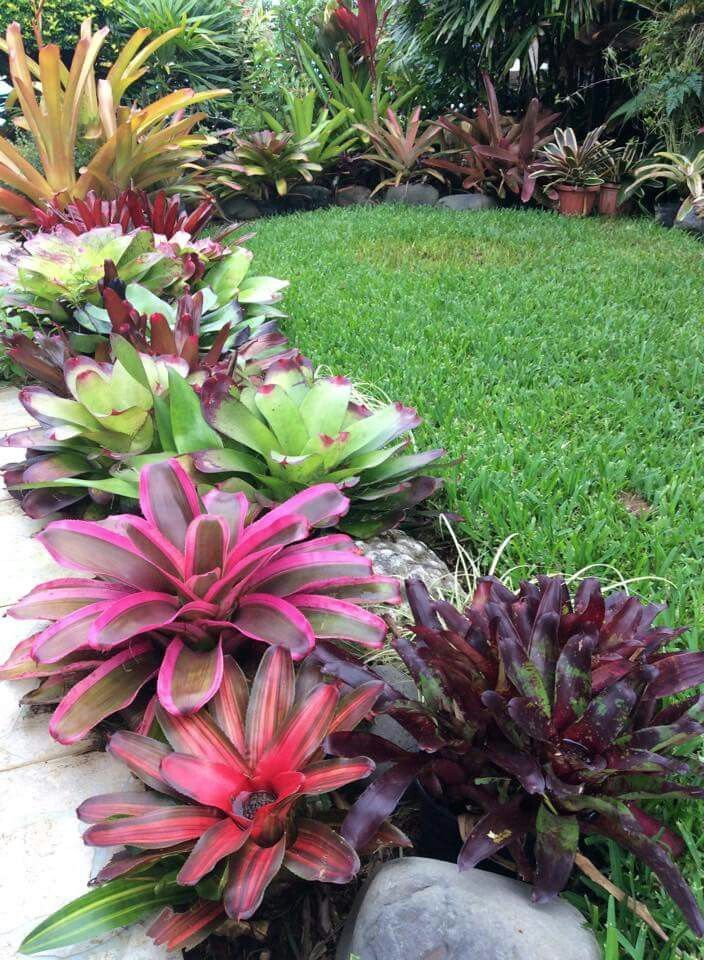 Bromeliads make a beautiful lower story. Most bromeliads require frequent water, love humidity and filtered to shady spots.
