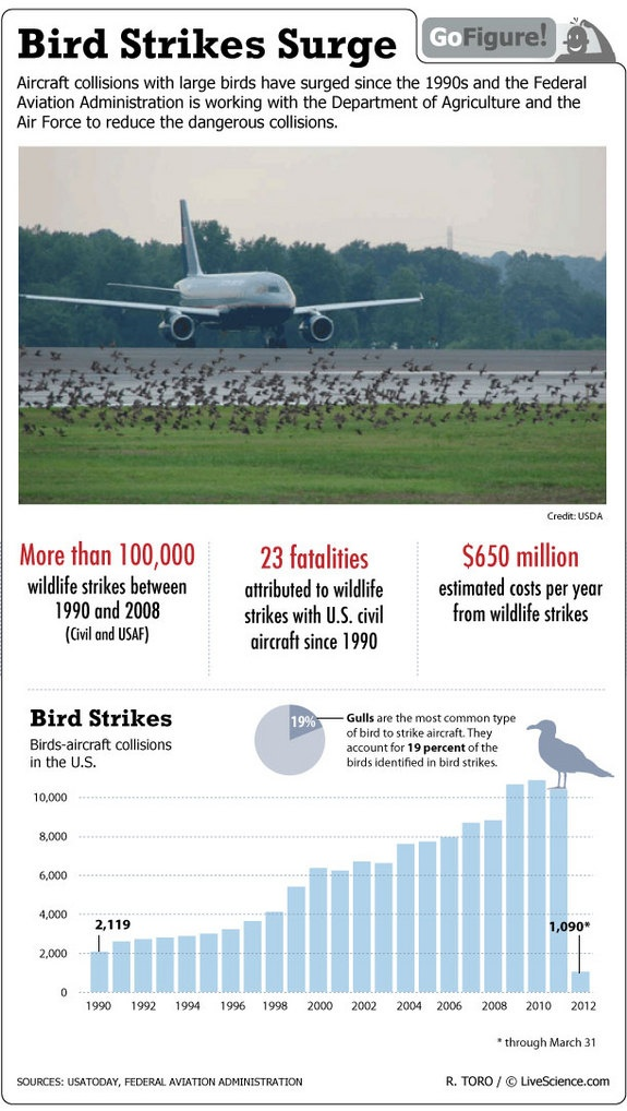 Bird plane collisions on the rise. Infographic Bird Strike Surge