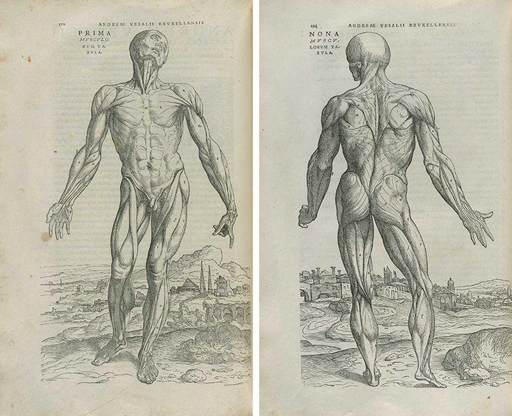 Медицинская анатомическая иллюстрация — история изучения тела человека в атласах 5 столетий. Часть 1 / Блог компании Visual Science / Хабрахабр