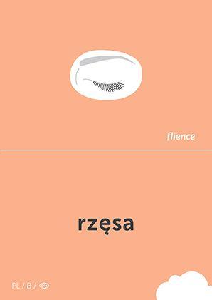 Rzęsa #CardFly #flience #human #polish #education #flashcard #language