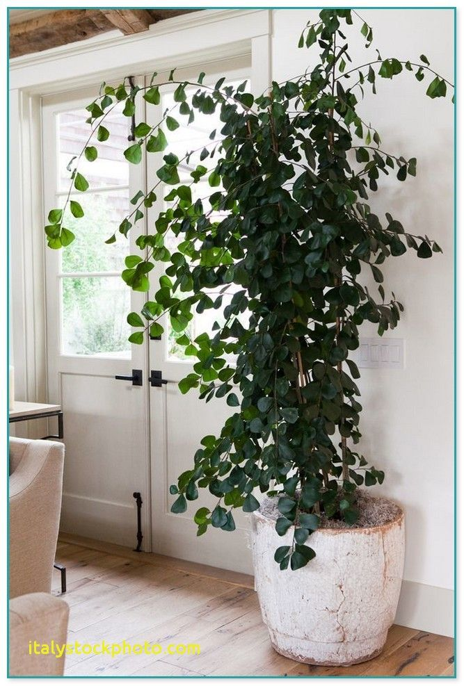 House Plants For Sale Online House For Rent Near Me Plants