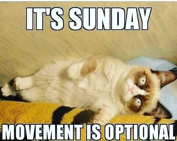 Sometimes we all need a lazy Sunday! Check it out! Follow us for today hottest trending! @epicworldstore #Funny #Catsof… | Funny sunday memes, Sunday meme, Memes