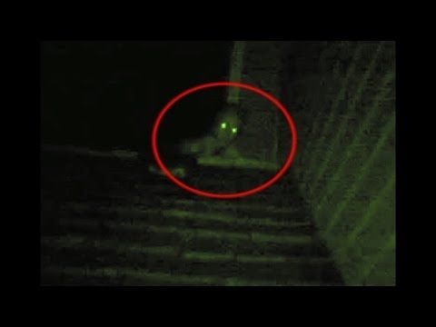 ▶ The Rake Creature Climbing On My Roof - YouTube